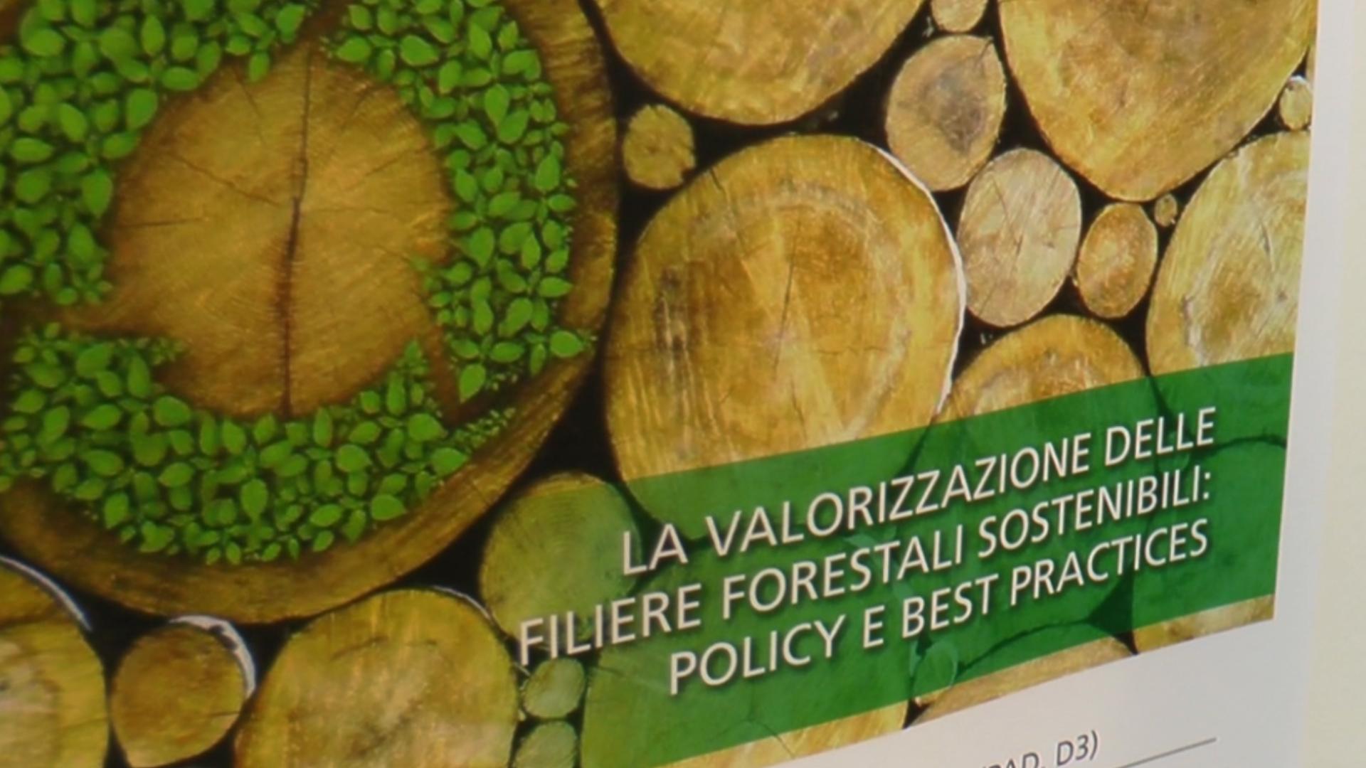 RISORSE FORESTALI: COME VALORIZZARE IL PATRIMONIO ITALIANO