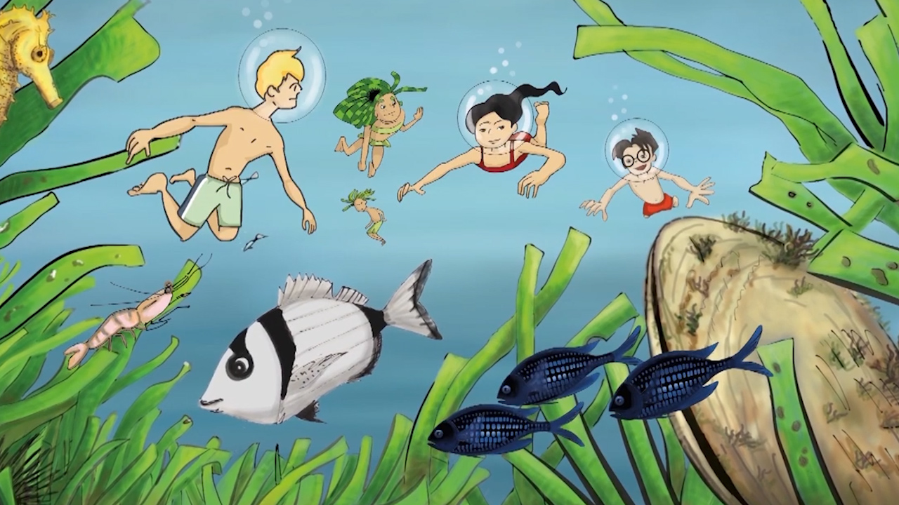 DISCOVERING POSIDONIA OCEANICA
